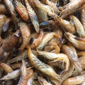 Crevettes grises de normandie