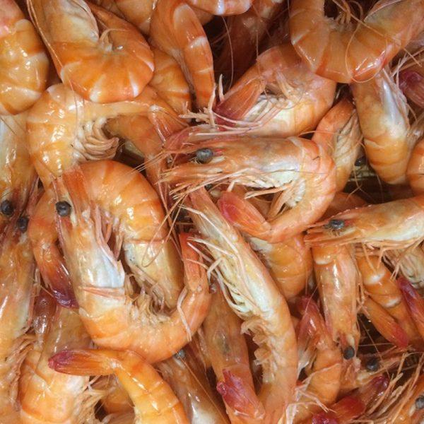Crevettes bio de madagascar petites